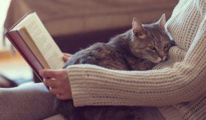 comportamiento del gato