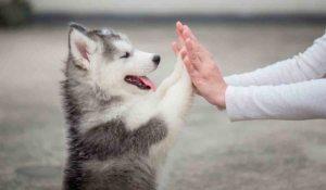 cuando los animales se comportan como humanos