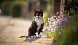 cómo le hacen los gatos para regresar a casa