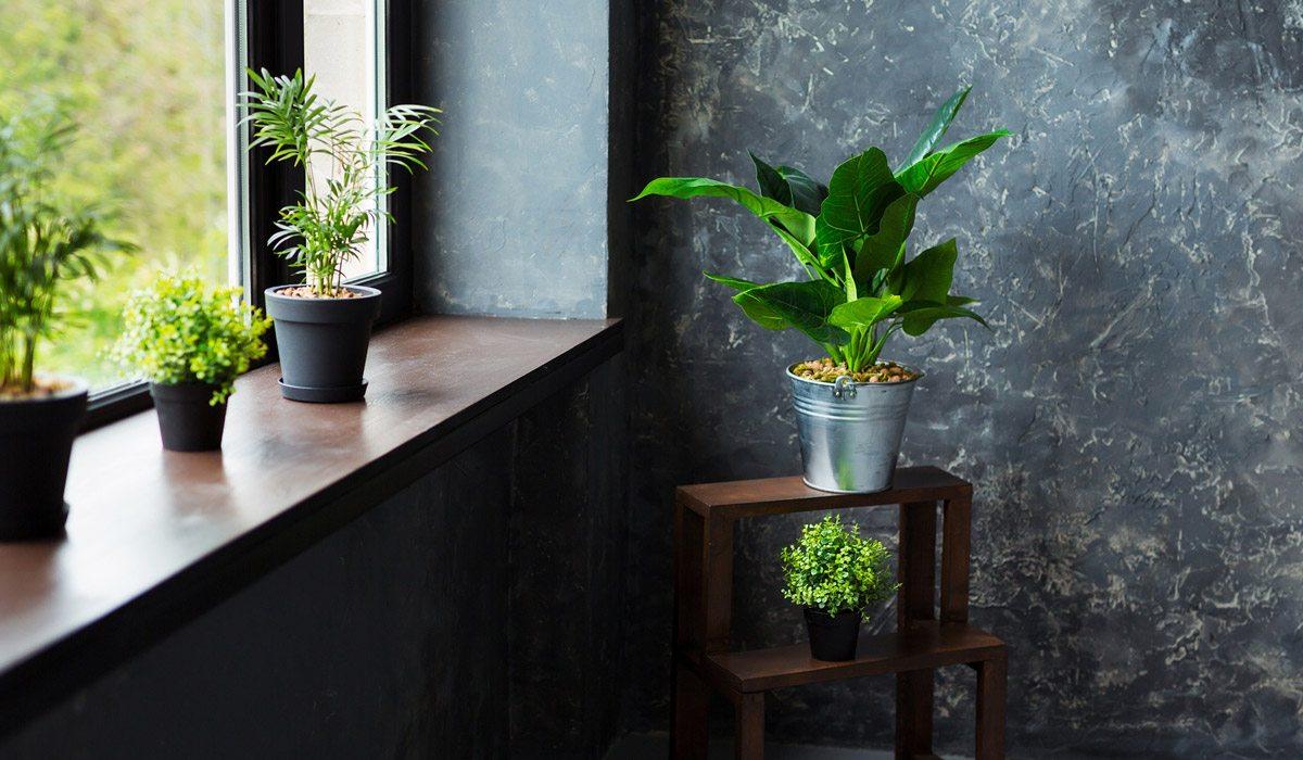 Descubre los beneficios de tener plantas en tu hogar