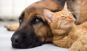 entiende a tus perros y sus comportamientos