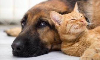 entiende a tus mascotas y sus comportamientos