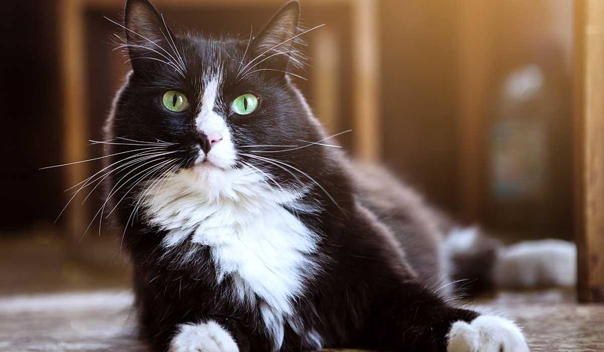 entinde un poco mas el idioma de tu gato