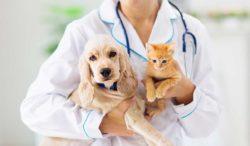 los perros y gatos pueden enfermarse de diabetes