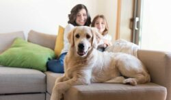 tu mascota tiene el poder de aumentar tu bienestar