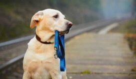¿Qué hacer si tu mascota se pierde? Empieza con esto