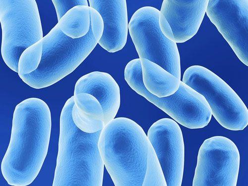 bacteriasbuenas