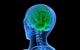 conoce lo que tu cerebro puede hacer