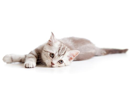 gato_deprimido