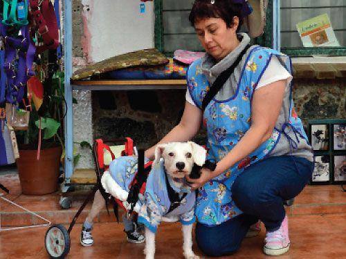 perros_discapacidad