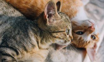 entrevista sobre la esterilización de animales