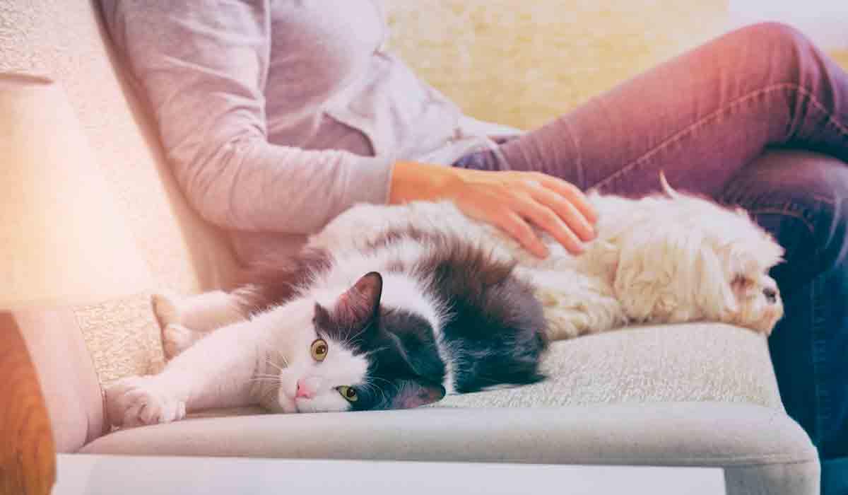 Pautas de limpieza con mascotas en el hogar
