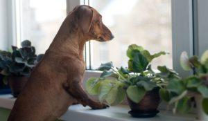 tips para que tu perro deje de ladrar