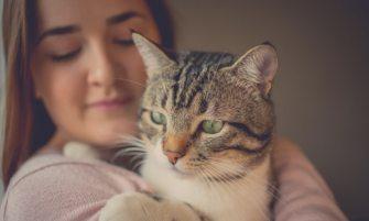 tu gato te quiere si