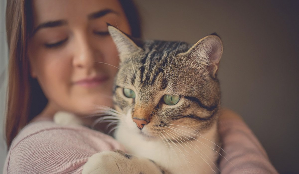 4 señales de que tu gato confía en ti