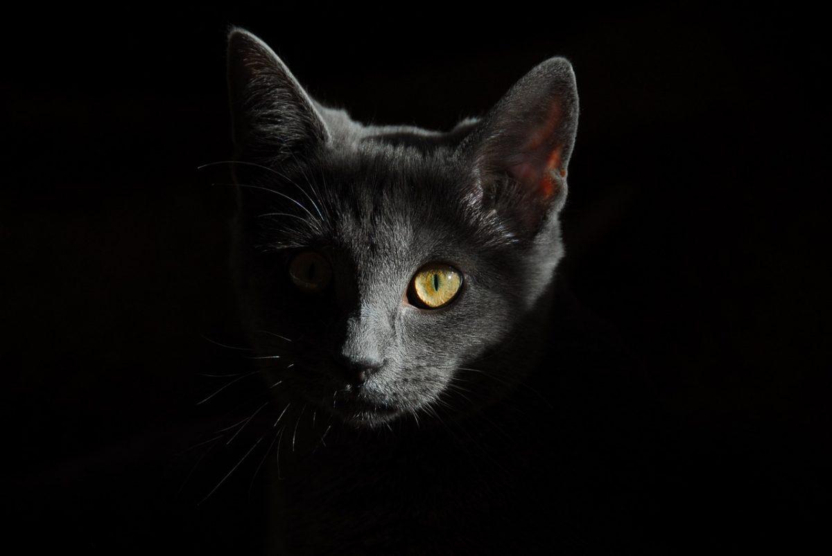 Supersticiones animales: creencias populares entre perros y gatos