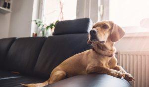 qué hace tu mascota sola en casa