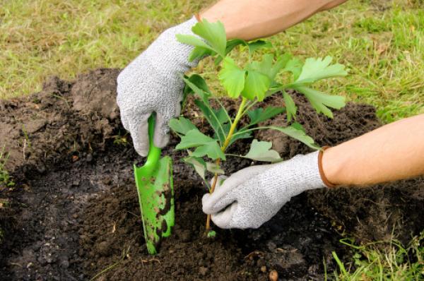 plantar-un-arbolsele
