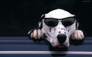con tu perro viajarás