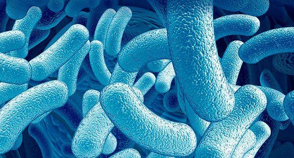 Probiótico LGG