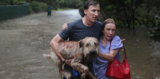 Ante las constantes lluvias en prácticamente todo el país, te decimos cómo actuar con tu mascota en este tipo de fenómenos.