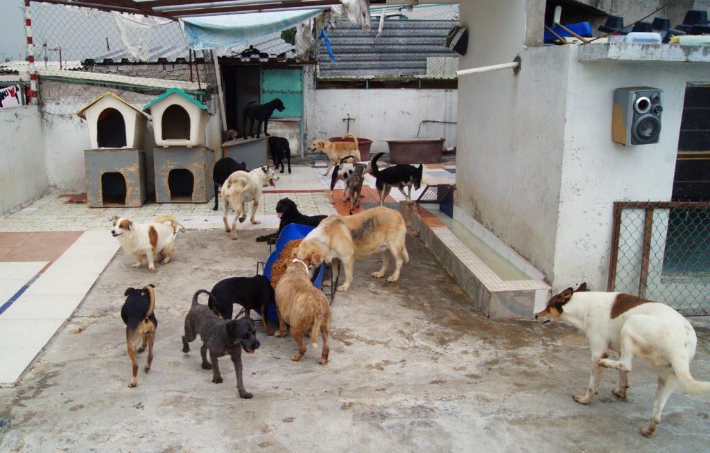 Arca de Noe para perros