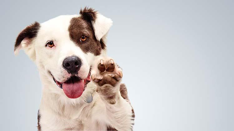 adopción canina