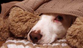 Si tu perro tiene pavor a la pirotecnia, esto puede tranquilizarlo
