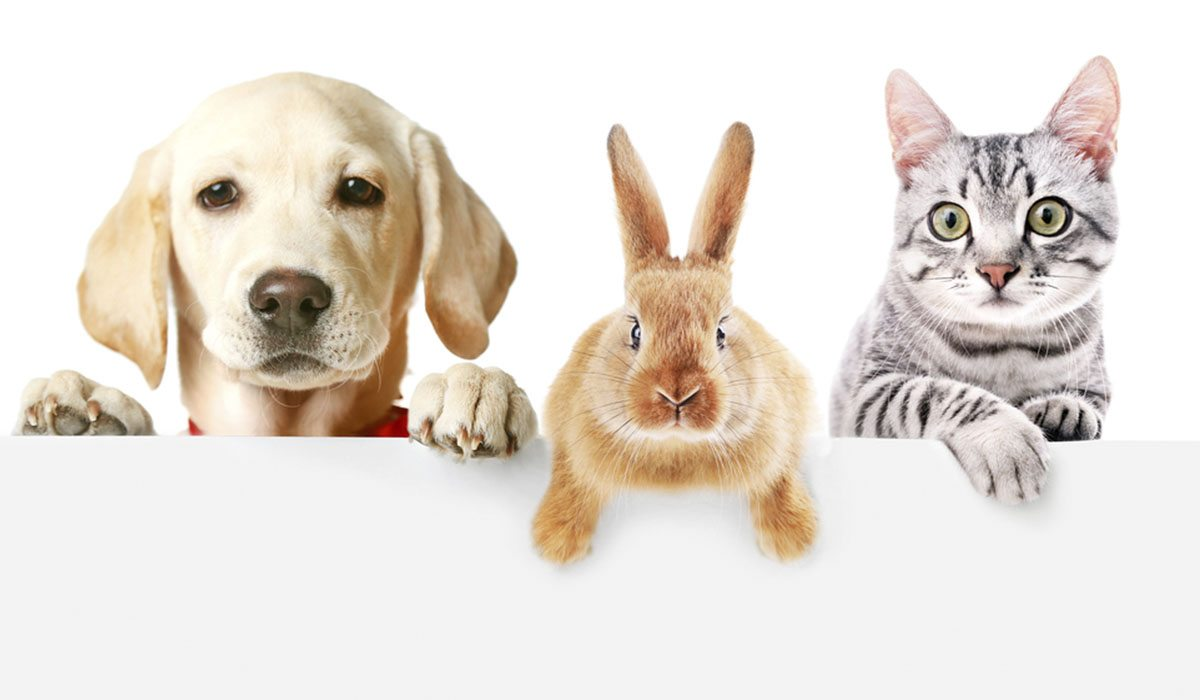 hábitos de tu mascota