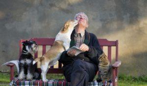 remedios para usar con tu mascota
