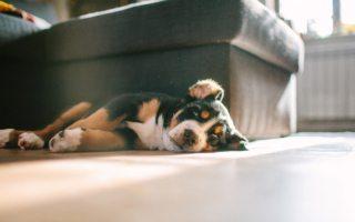 qué hacer con una mascota con ansiedad