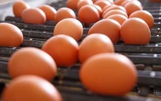 mantén en buen estado los huevos en época de calor
