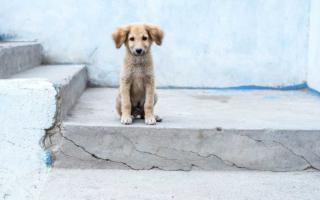 los perros de la calle como un problema
