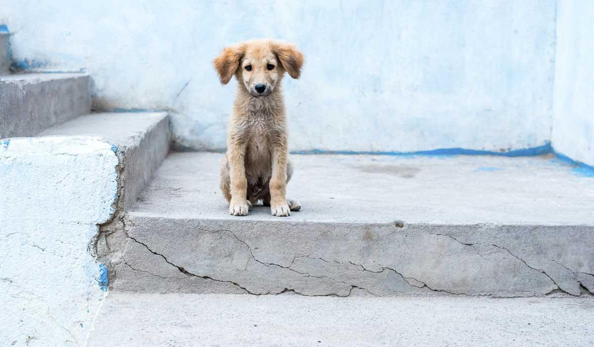 Resultado de imagen para perro callejero