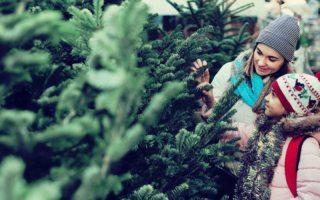 secretos de tu árbol de Navidad