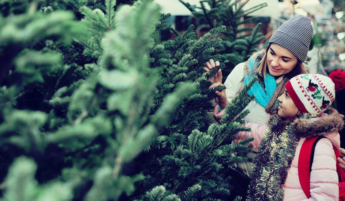 Secretos que tu árbol de Navidad quiere que sepas