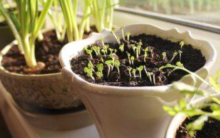 aprende cómo sembrar plantas medicinales