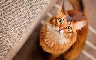 cosas que tu gato quisiera que entendieras