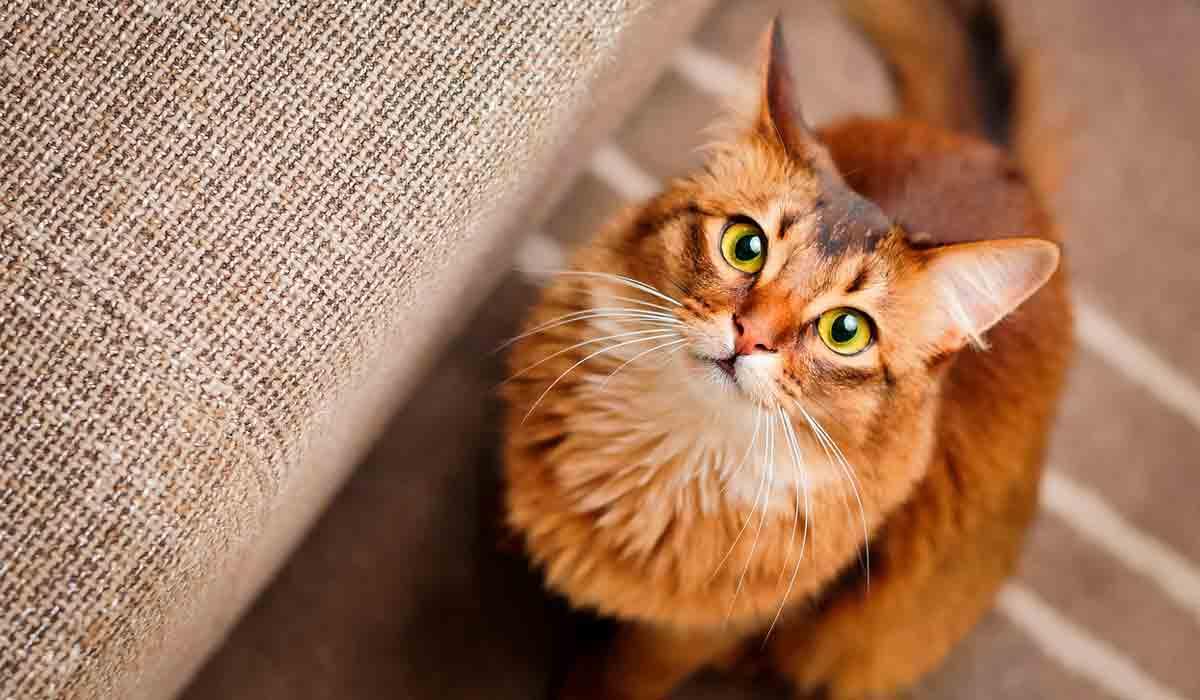 Conoce estas 17 cosas que tu gato quisiera decirte