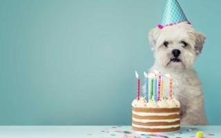 cómo contar los años en un perro