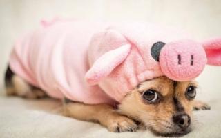 disfrazar a los perros podría ser un trastorno psicológico