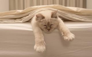 consejos para dueños de gatos