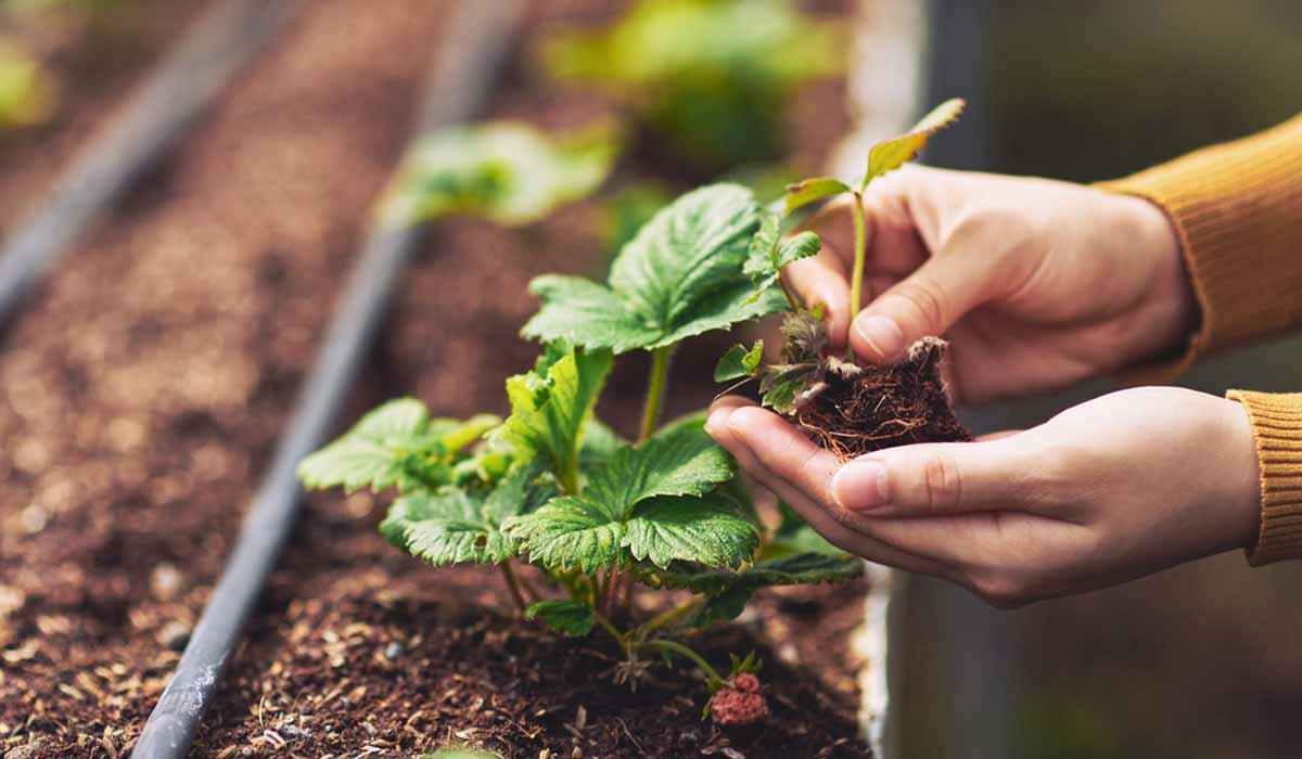Confirman que las plantas sienten dolor... ¡y lo transmiten!