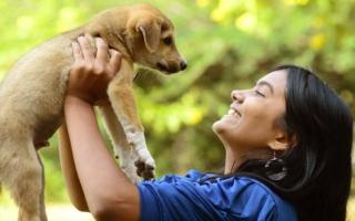 lo que debes saber antes de rescata a un animal