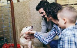así cambian los perros al ser adoptados
