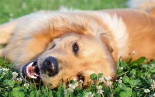 señales para saber si tu perro es feliz