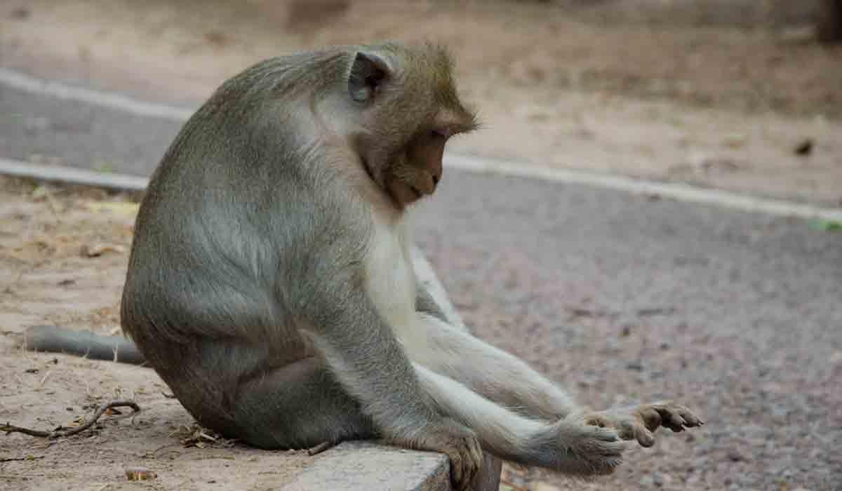 los animales también sienten la pérdida de un ser querido