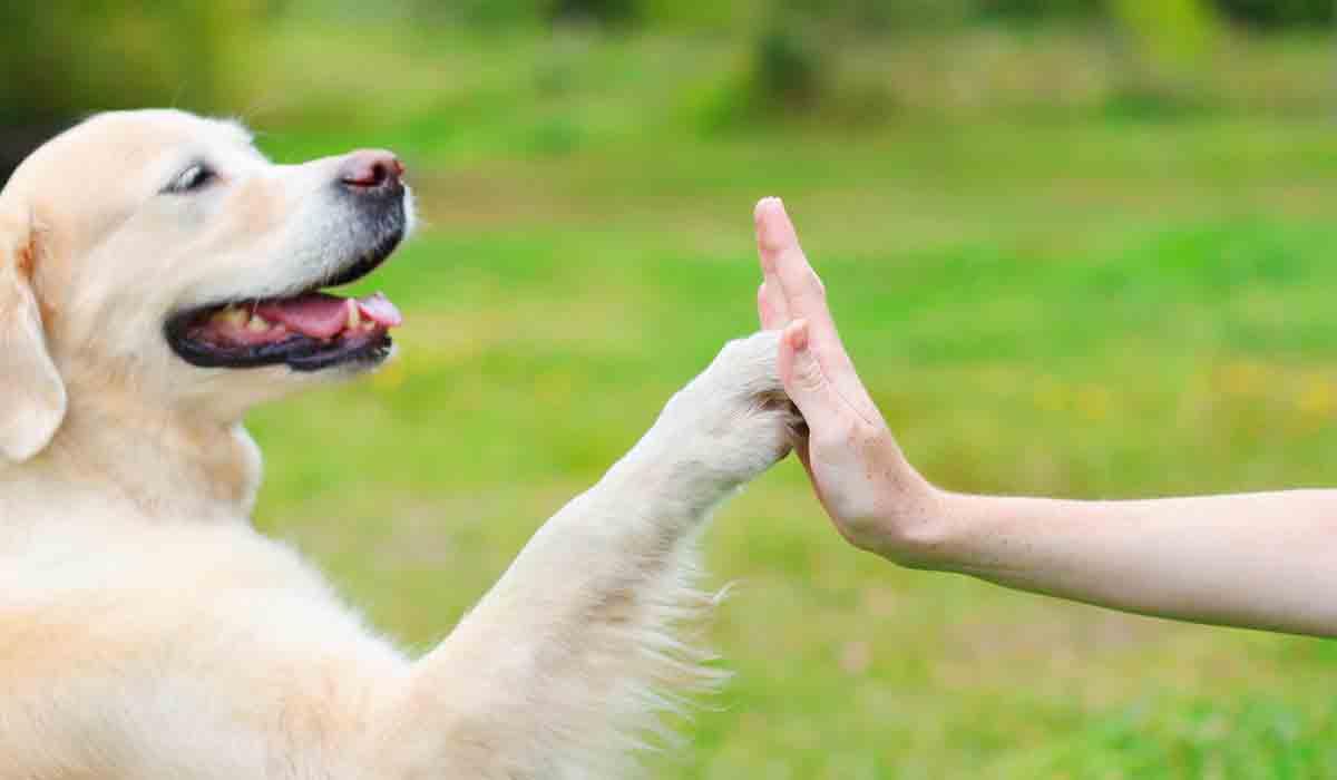 13 maneras simples de saber si tu perro es inteligente