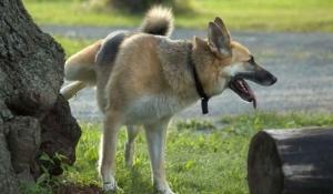 por qué los perros patalean el pasto