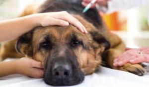 señales de un perro enfermo